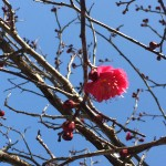 2月梅が咲き始めました